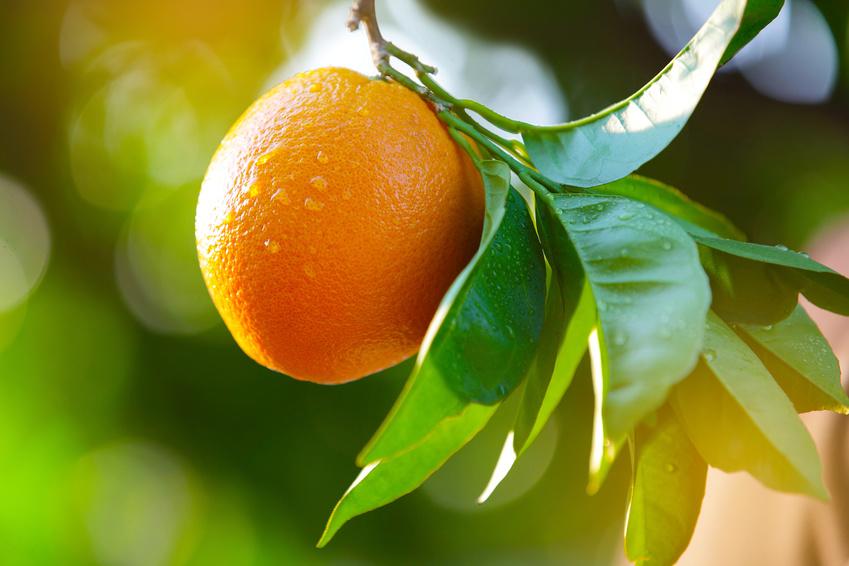 Die Früchte der Führung